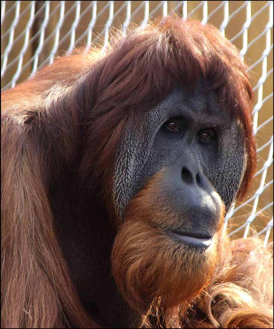 ..ein tierisches Portrait ...