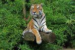 Ein Tiger im Grünen