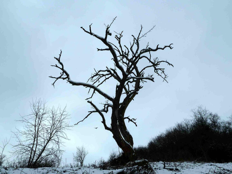 ein toter Baum mit Milan