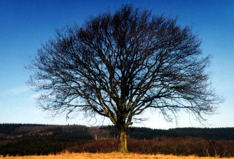 Ein Traum-Baum