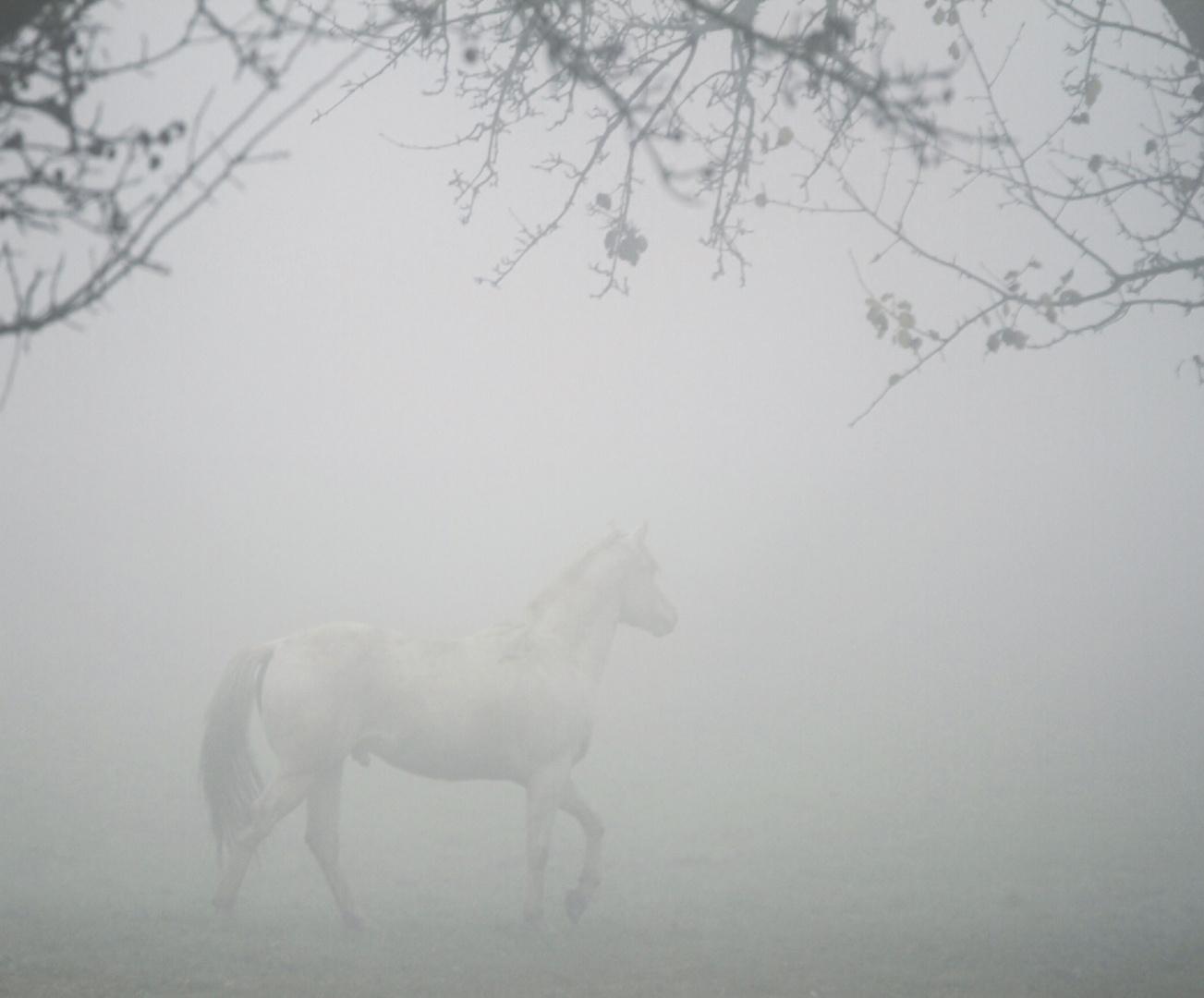Ein Traum im Nebel