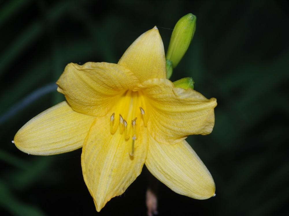 Ein Traum in Gelb