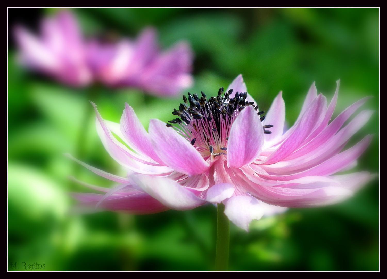~~Ein Traum in rosa~~