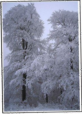 >>>))) ein traum in weiß ...