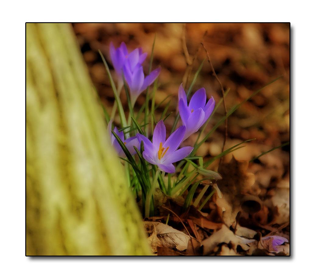~ Ein Traum von Frühling ~