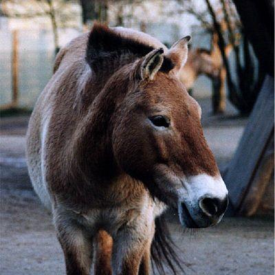 Ein trauriges Pferd (aber ich glaub die gucken immer so)