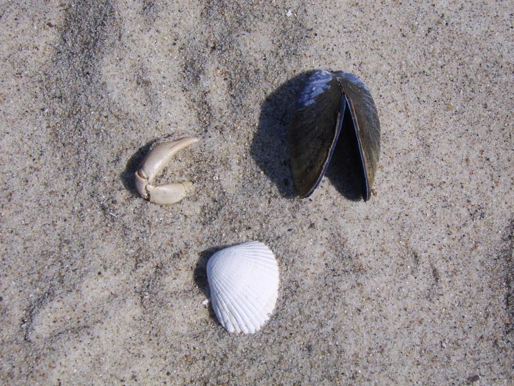 Ein Treffen im Sand