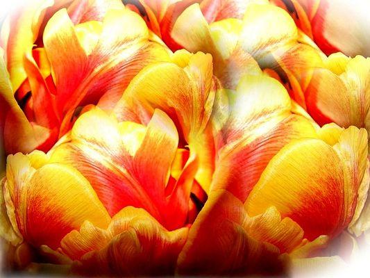 Ein Tulpengruß für die Mai Geburtstage