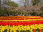 Ein Tulpenmeer in spanischen Farben....