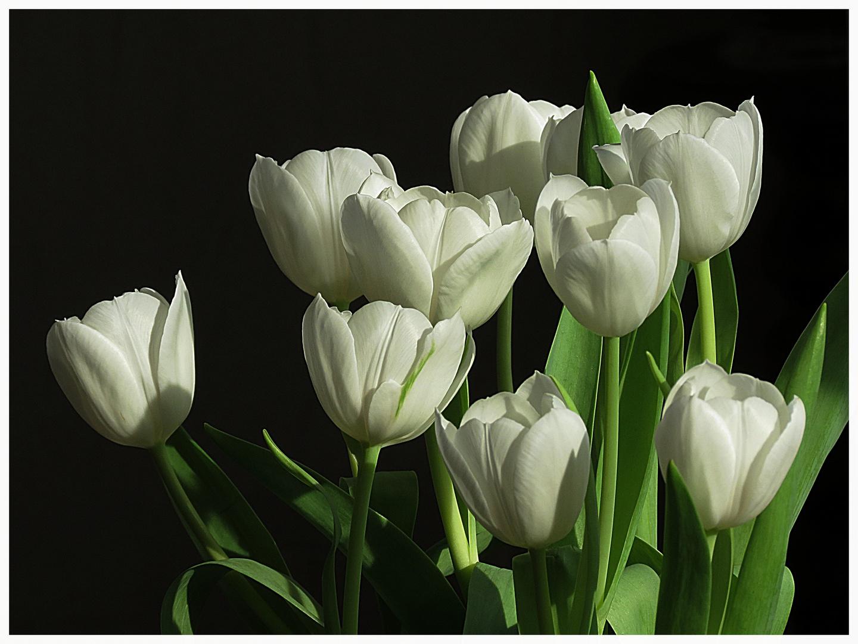 ein Tulpensträußchen für Sonntag