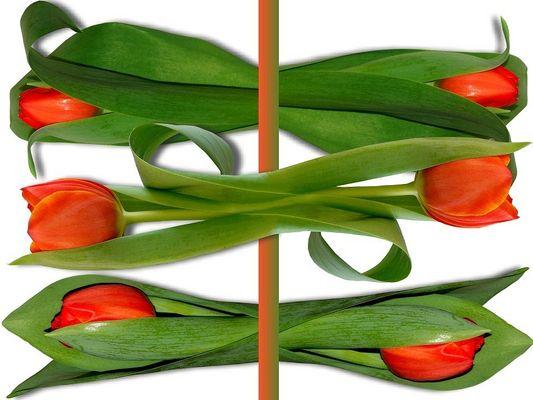 Ein Tulpenstrauß