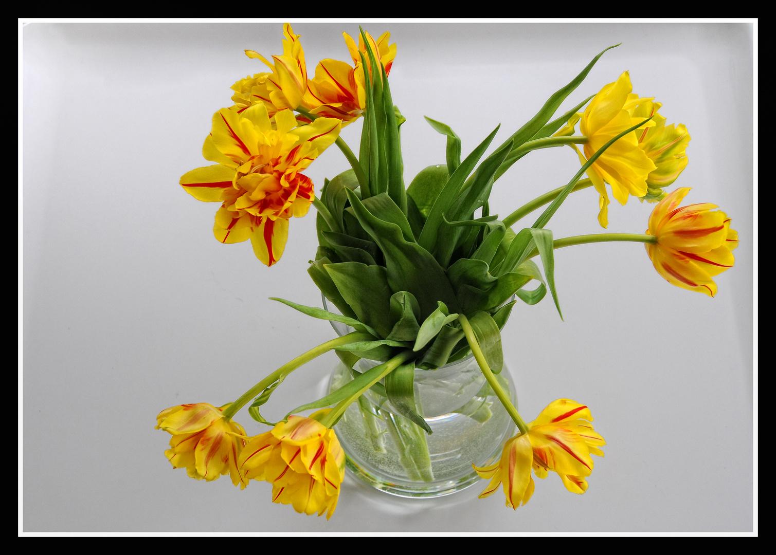 Ein Tulpenstrauss für Dich