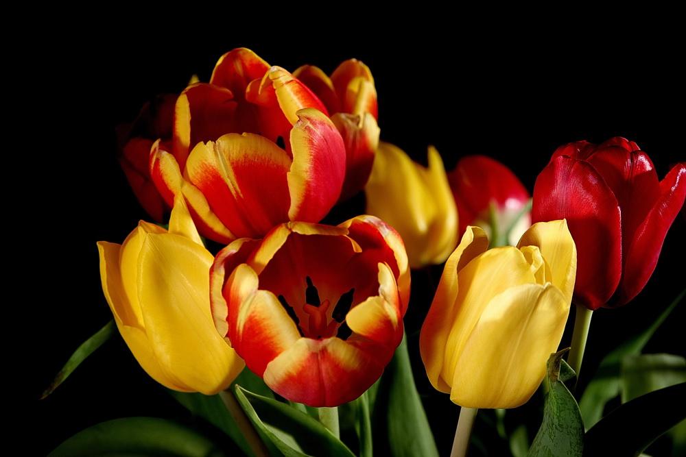 Ein Tulpenstrauß II