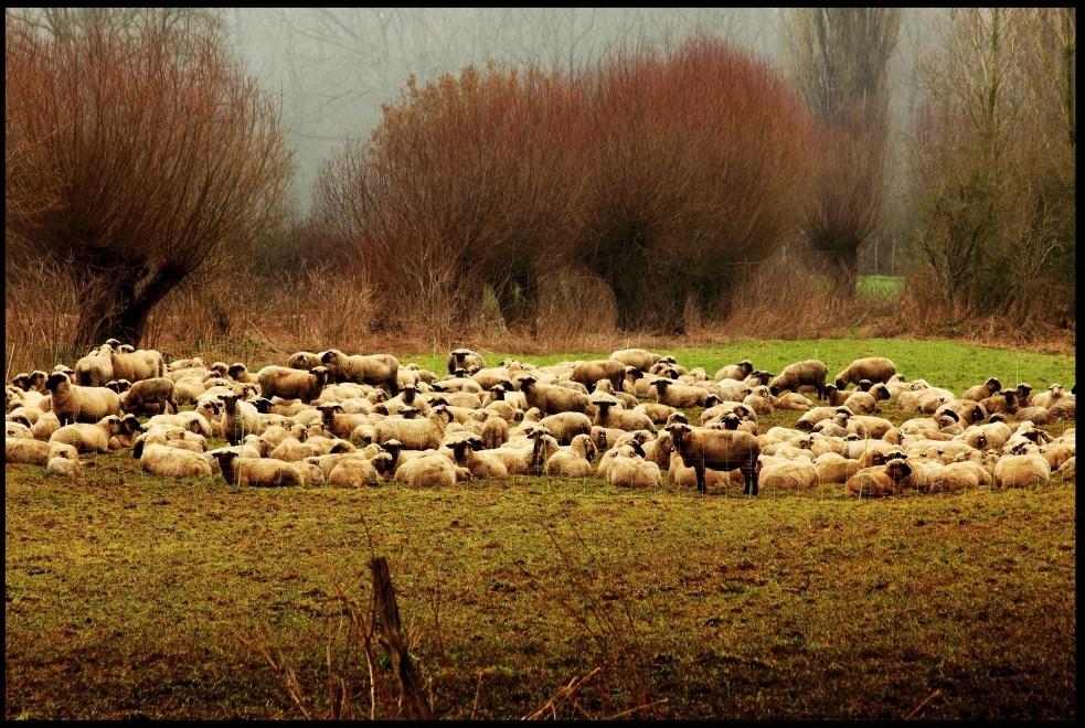 ein typisches Niederrheinfoto