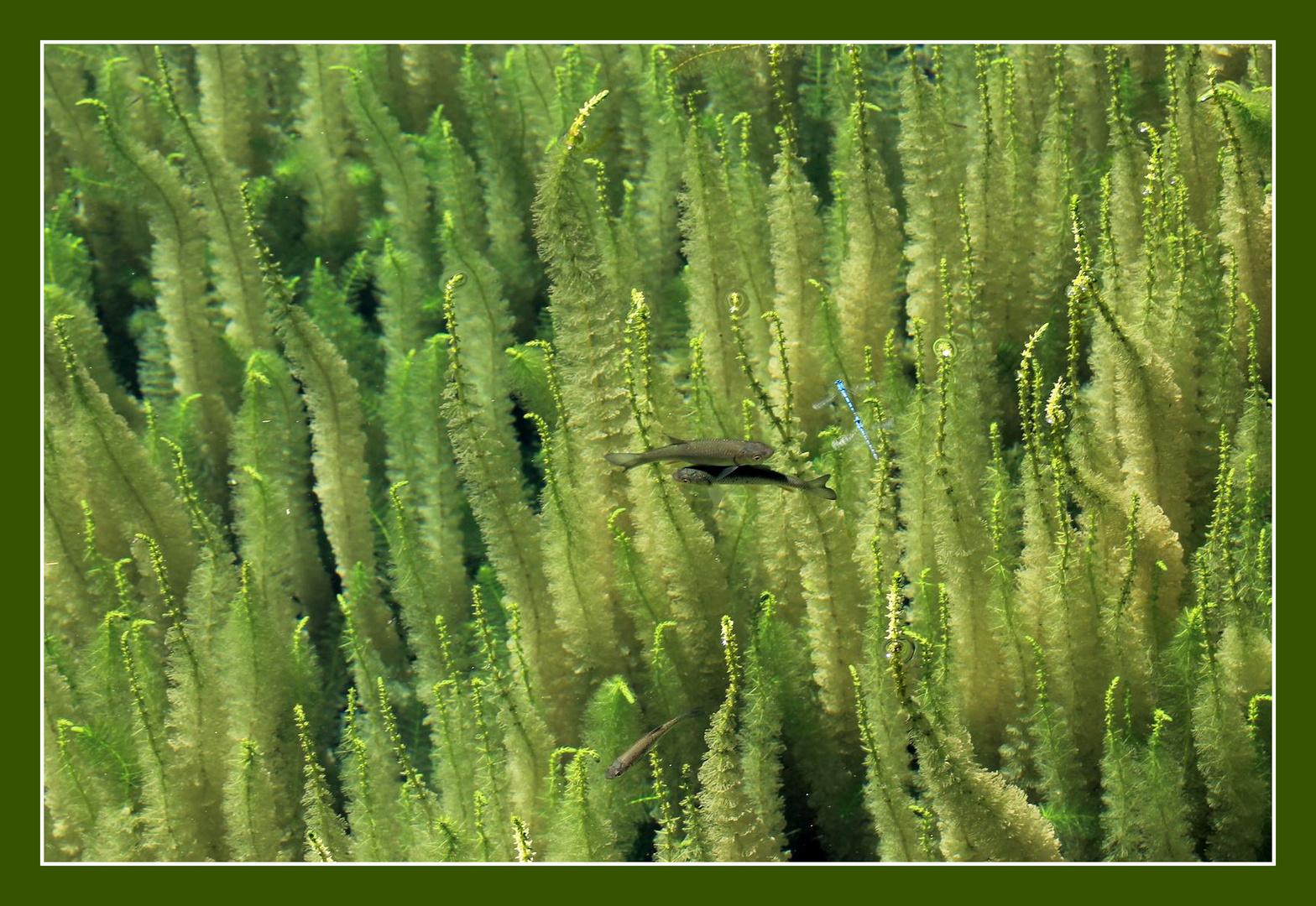 ein Über-Unterwasser Foto