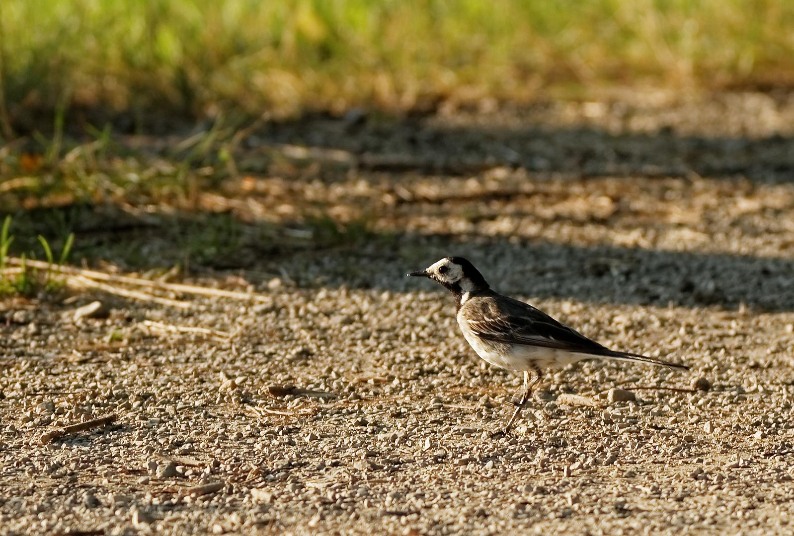 Ein unbekannter Vogel an einem See