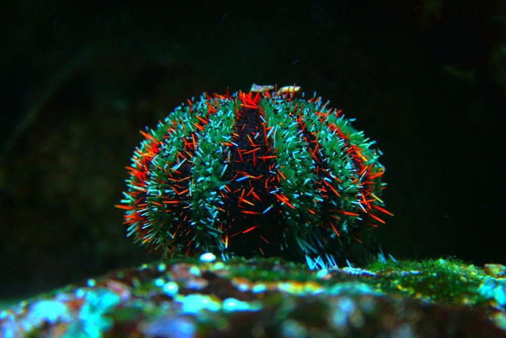 Ein Unterwasser-dings-da ;o)