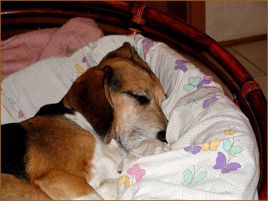 ein verschlafener Charlie