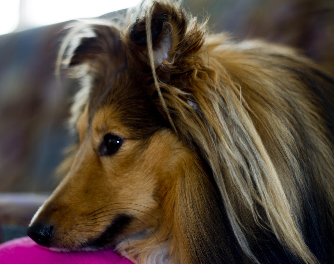 Ein verträumter Hund :)