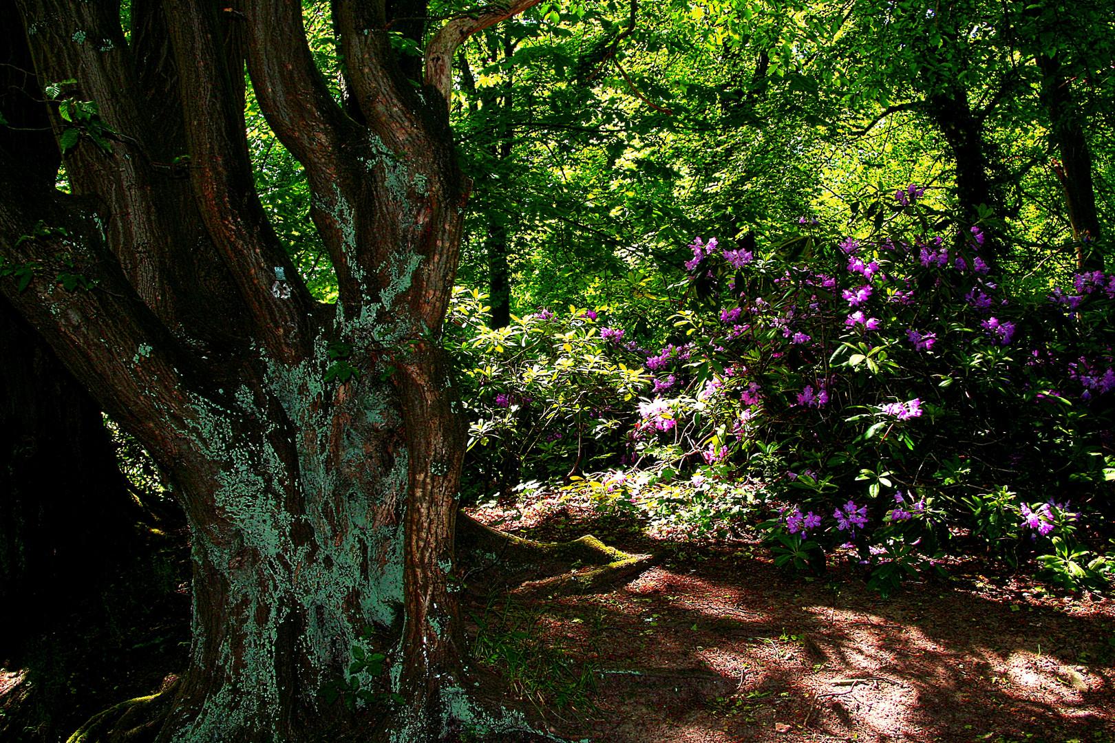 Ein verwunschener Waldweg voller Geheimnisse