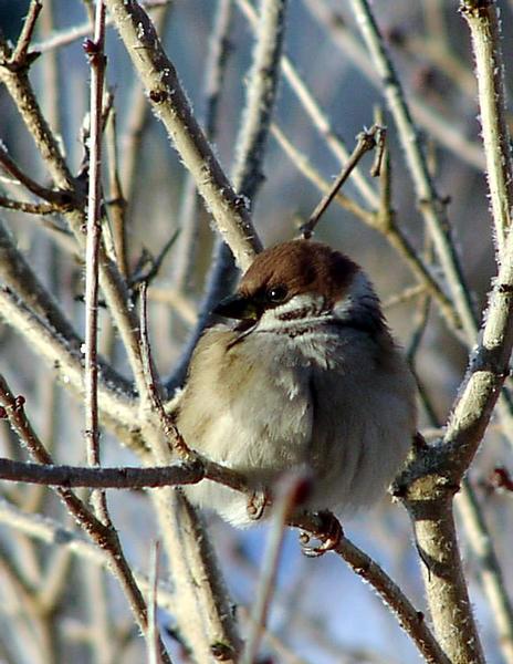Ein Vögelchen