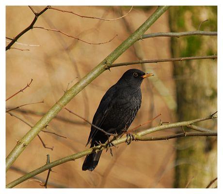 ....ein Vogel