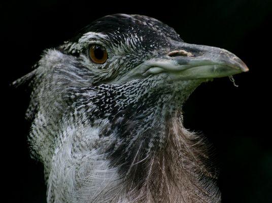 ein vogel ;-)