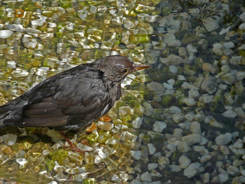 Ein Vogel der badet