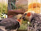 Ein Vogel wollte Hochzeit halten...