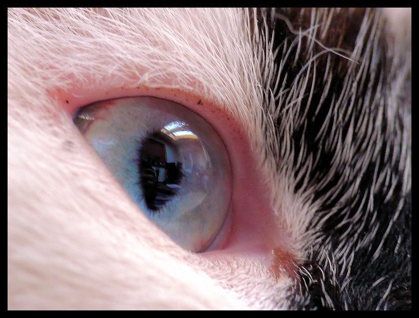 Ein wachsames Katzenauge
