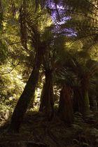 Ein Waeldchen in Tasmanien