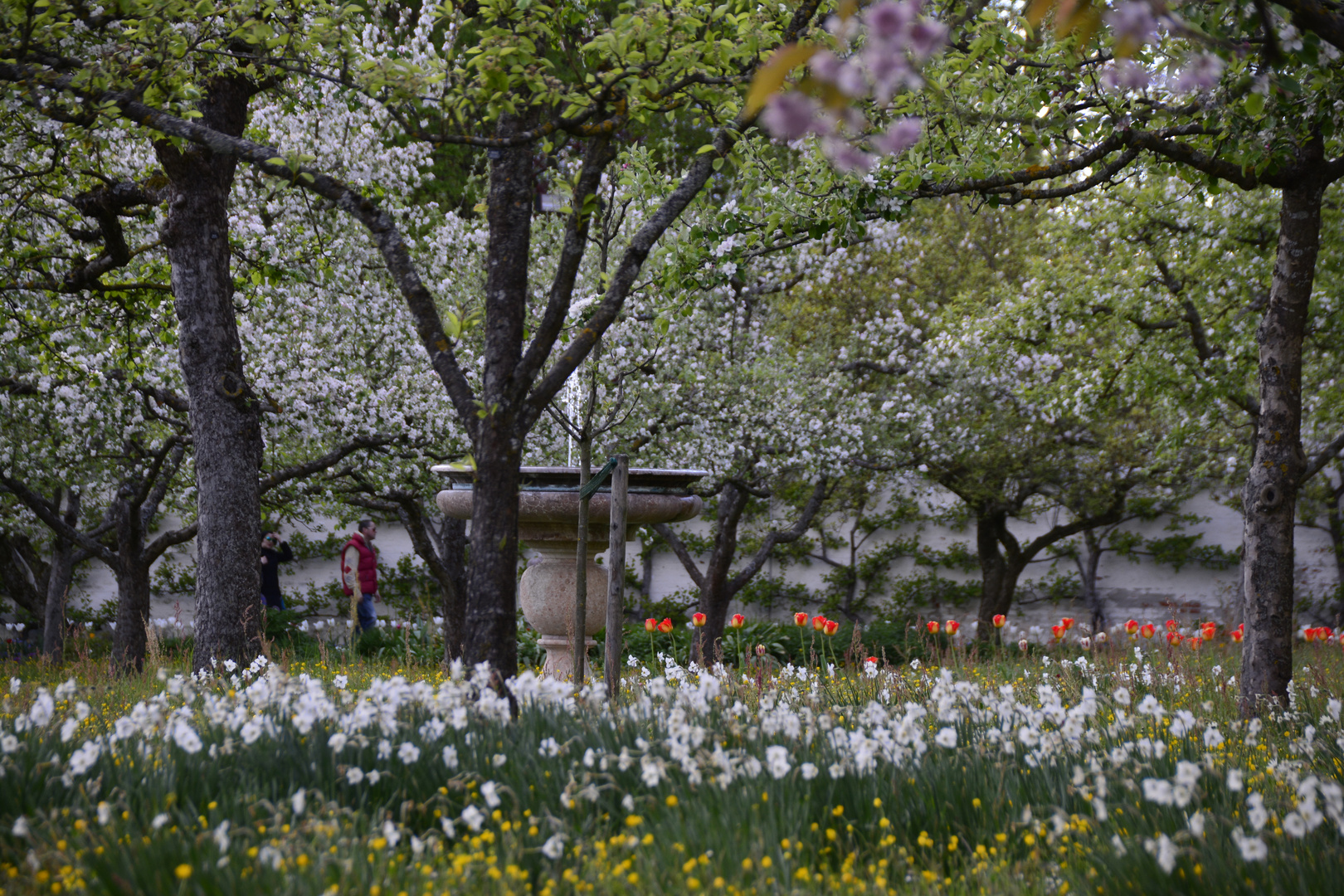 Ein wahre Frühlingsexplosion im Hofpark