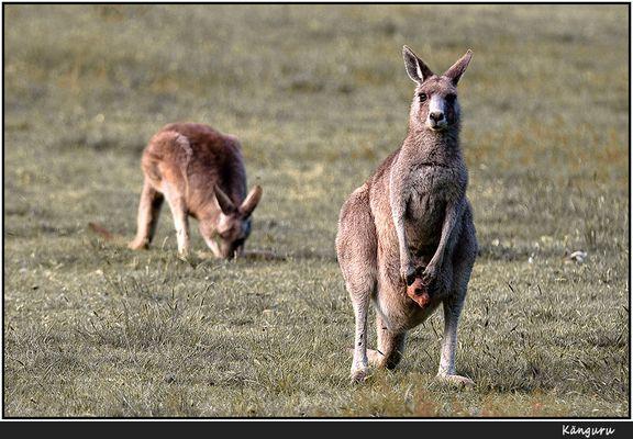 Ein Wahrzeichen Australiens