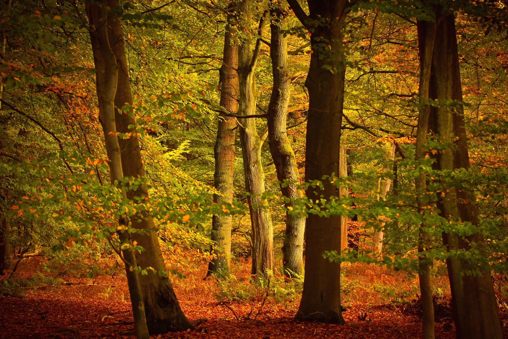Ein Wald Experiment oder die realative Sichtweise der Umgebung