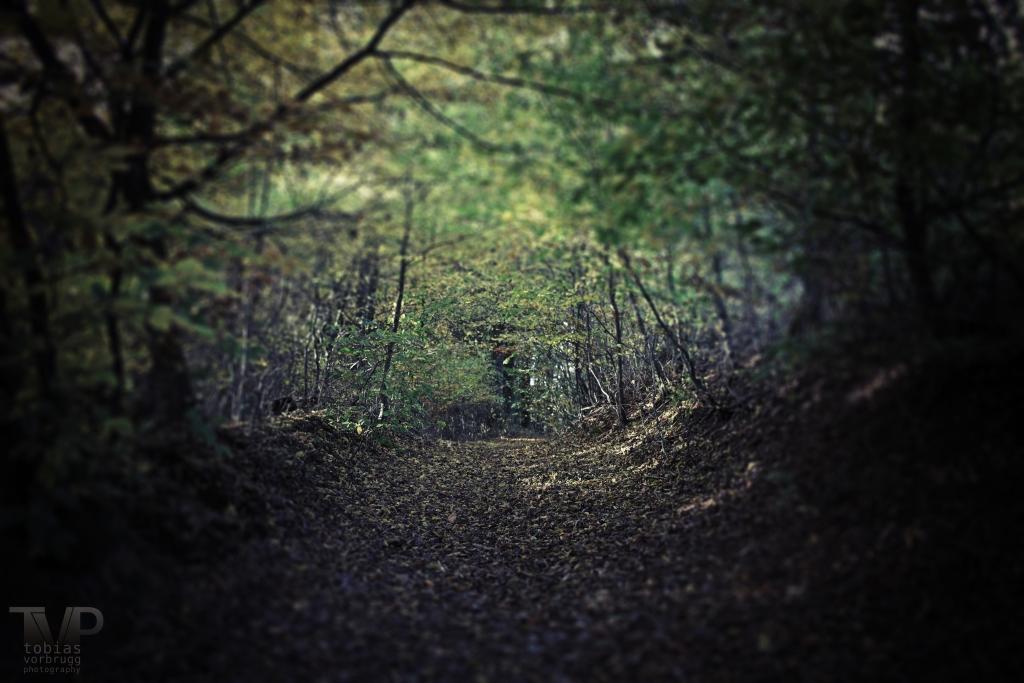 Ein Wald im Bergischen