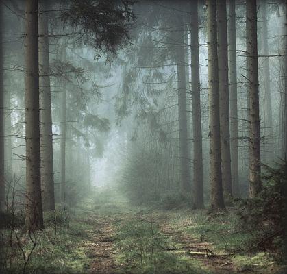 Ein Wald ist ein Wald ist ein Wald