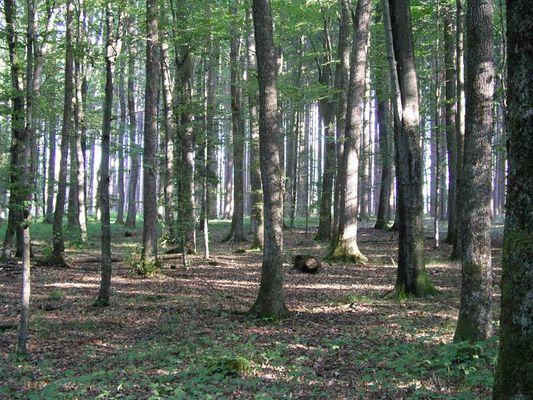 Ein Wald voll Bäume