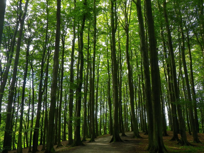 Ein Wald voller Bäume