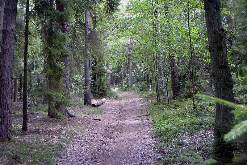 Ein Waldspaziergang.....