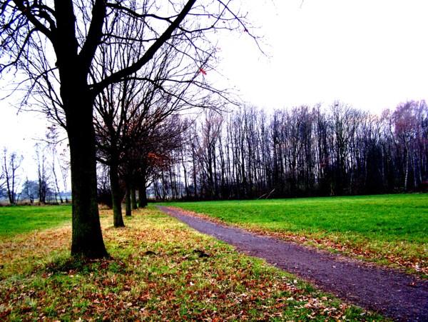 Ein Waldweg zum Wald