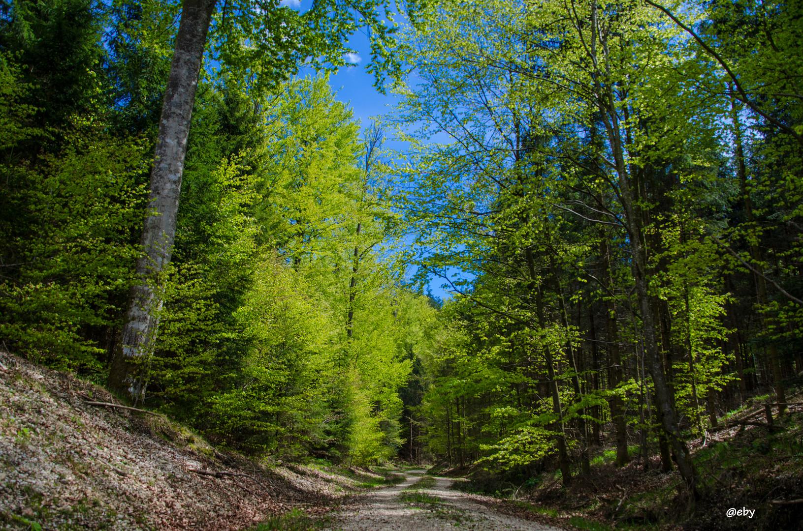 Ein Wanderung im Kobernaußerwald richtung Windpark