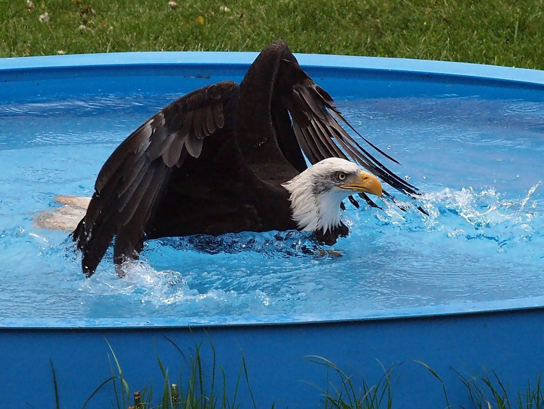 ein Wasservogel???