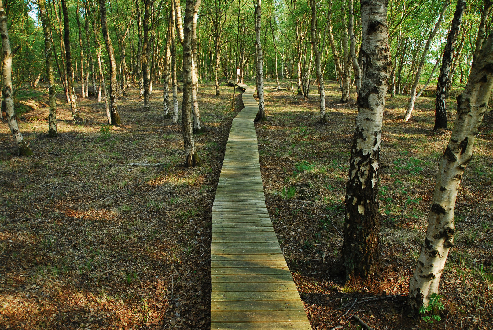 """""""ein Weg durchs Moor"""" - Bathorn"""