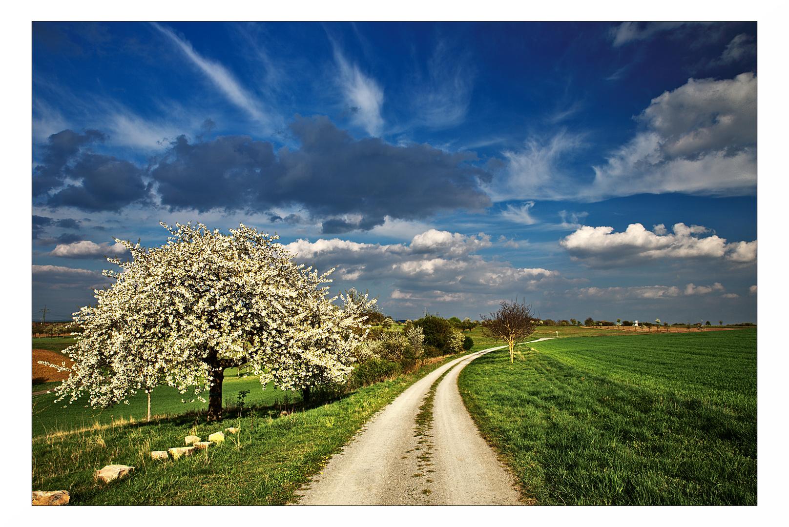 Ein Weg, ein Baum