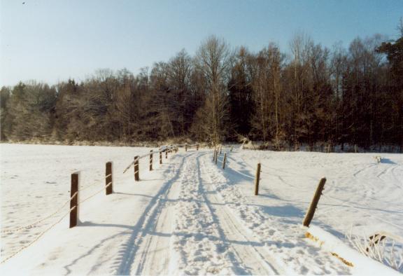 Ein Weg im Winter