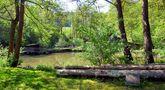 Ein Weiher im Wald von Günter Walther