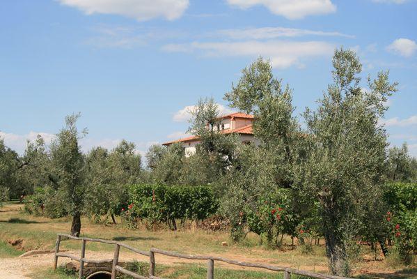 Ein Weingut in Bolgheri