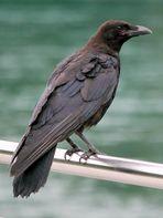 ein weiser Vogel
