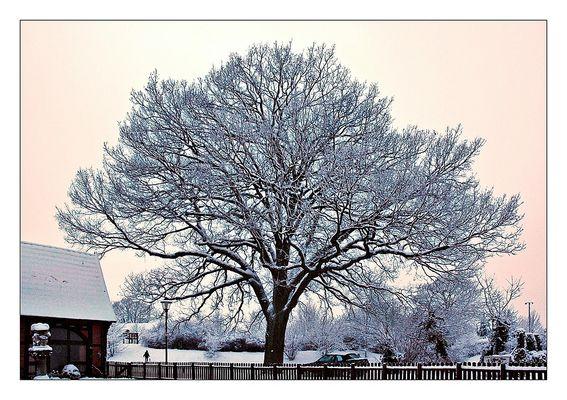 Ein weißer Dezembernachmittag
