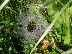 Ein weiteres Spinnennetz
